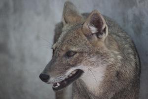 野生動物の食事について